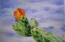 Tunera con flor