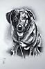 Un perro - retrato por encargo