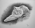 Una gata blanca