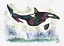 Universe orca