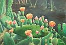 Tunera en flor