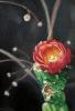 Flor de higo pico