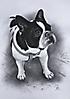 Retrato por encargo de un perro